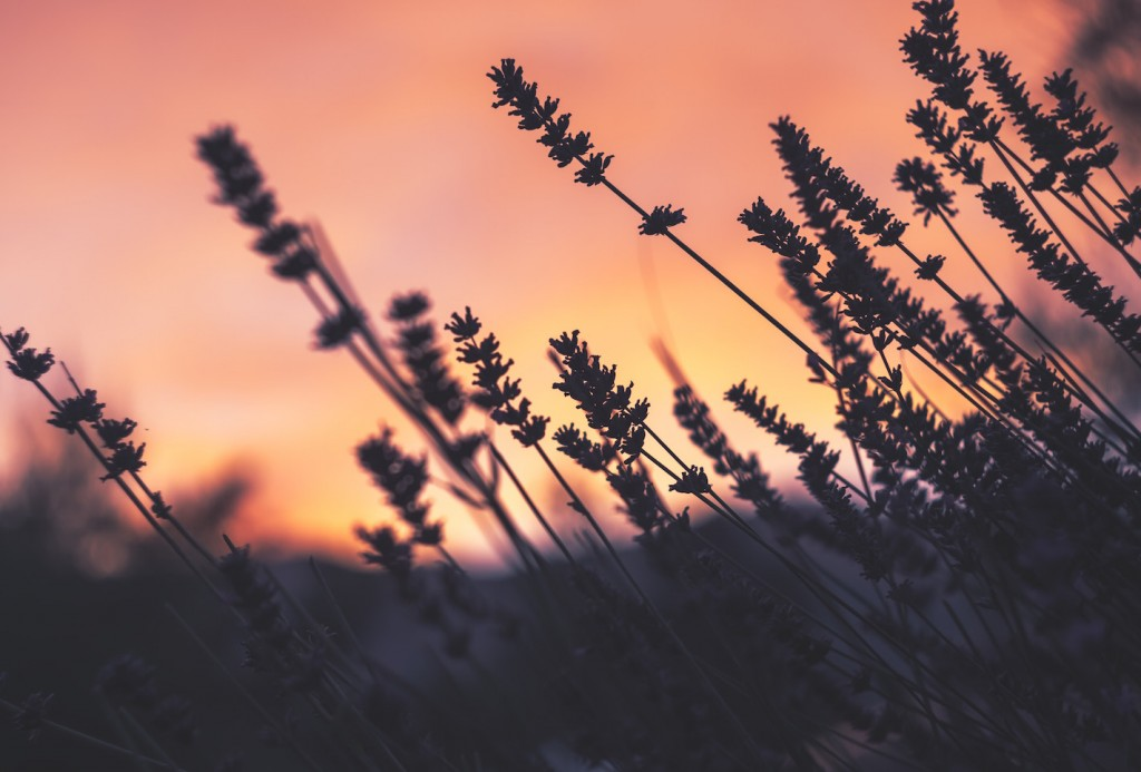 perche-l-aromaterapia-fa-bene-e-come-puo-migliorare-il-tuo-ambiente-di-lavoro